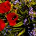 L'orto sinergico: come si rigenera la natura