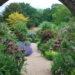 Le piante e i loro molteplici benefici